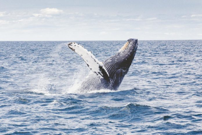 The Best Places To Visit for Whale Watching Summer 2021