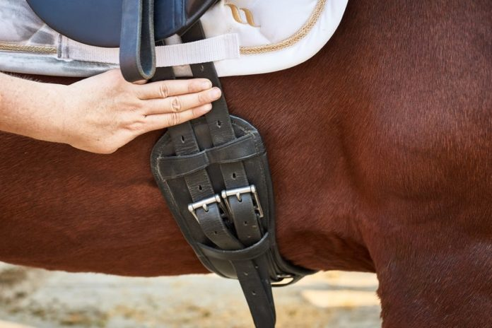 The Guide to Selecting the Perfect Horse Dressage Girth