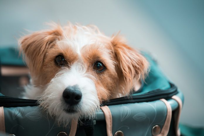 The 6 Best Airline-Approved Dog Carriers